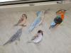 BIRDS ACROSS EUROPE, eTwinning project