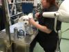 Naravoslovni dan: Skrb za živali